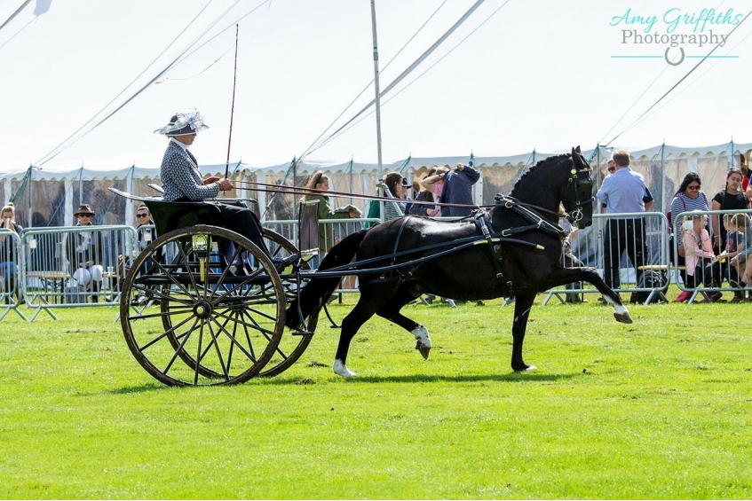 Ashbourne Show - 15th August 2020
